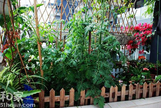阳台花园,家庭绿植,阳台设计,青岛装修图片