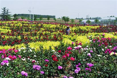 青岛市即墨市灵山镇姜戈庄村等12个村庄规划作为省级